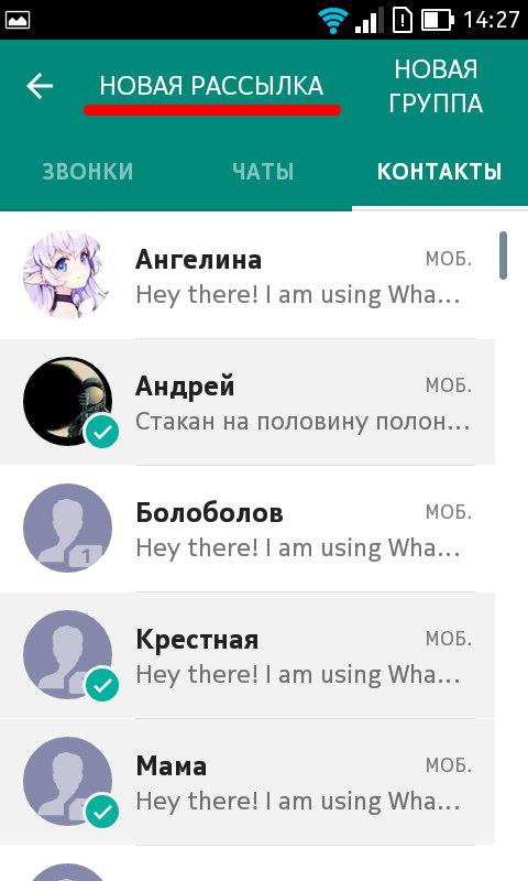 Whatsapp рассылка 1