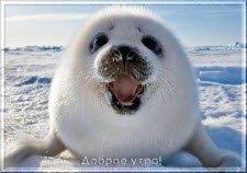 Зимнее, Доброе утро!