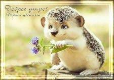 Доброе утро, тебе цветочек