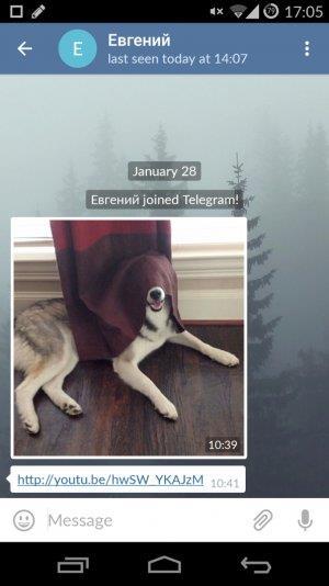 telegram 300x534