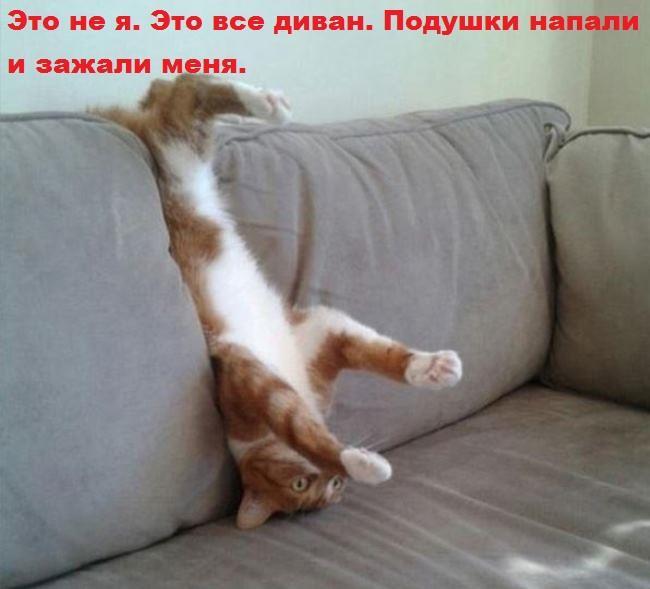 Очень смешные фото животных с надписями